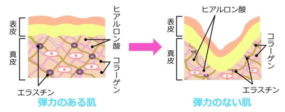 肌 弾力 コラーゲン