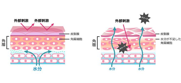 バリア機能(普通肌&敏感肌・乾燥肌)