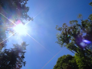 日差し(紫外線)