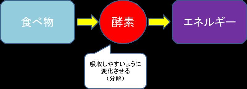 酵素 役割