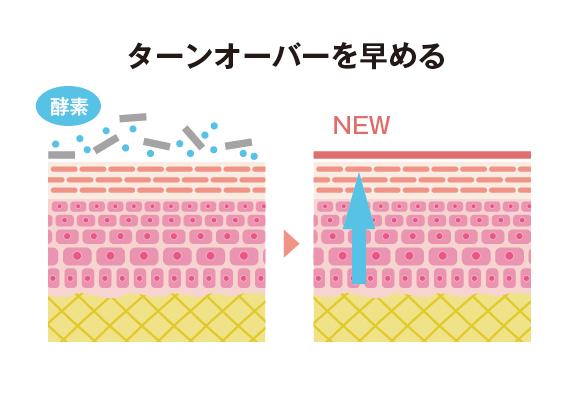 【酵素】ターンオーバーを整える