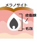 皮膚の細胞のつくり②