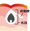 皮膚の細胞のつくり①