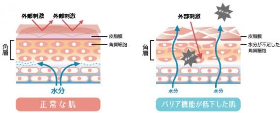 正常な肌とバリア機能が低下した肌