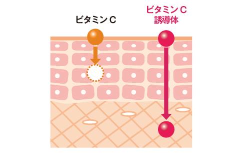 ビタミンC誘導体とビタミンCの比較