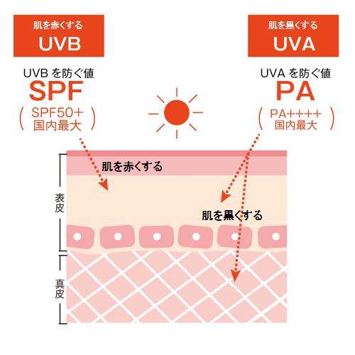 紫外線の仕組み