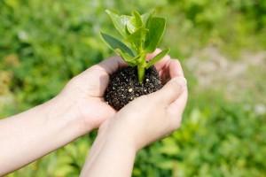 植物の栄養 ルイボスティー 効果