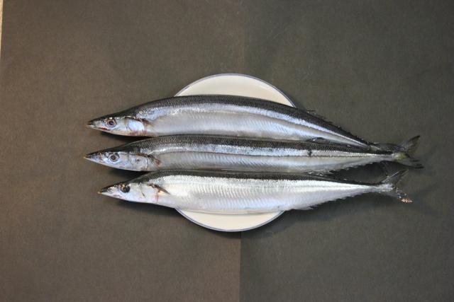 生理痛 症状 青魚