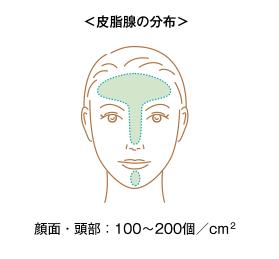 皮脂腺 分布