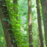 森_木のアップ