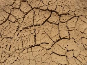 頭皮 かゆみ 乾燥