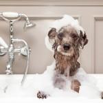 お風呂タイムは美容タイム♡毎日のお風呂でできる美容法をご紹介!