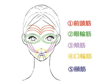 表情筋トレーニング図