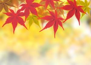 秋 洗顔②