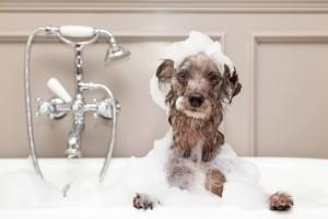 洗髪 頻度 お風呂
