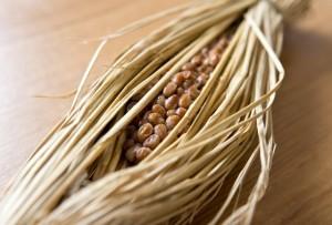 乾燥肌 食べ物 即効性 レシピ 油 改善 納豆