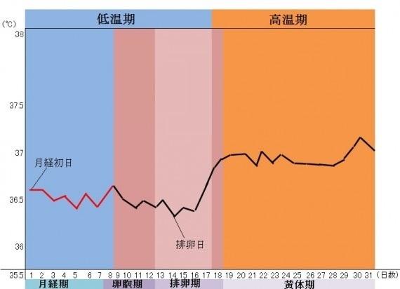 基礎体温の表
