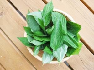 乾燥肌 食べ物 即効性 レシピ 油 改善 モロヘイヤ