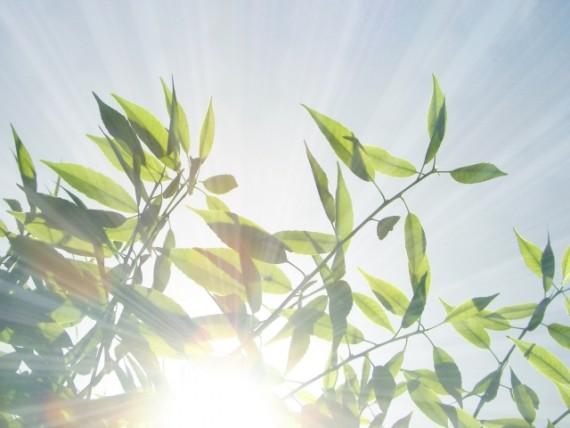 PMS症状 日光を浴びる