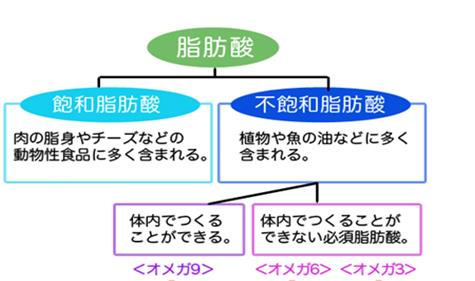 脂肪酸 説明図