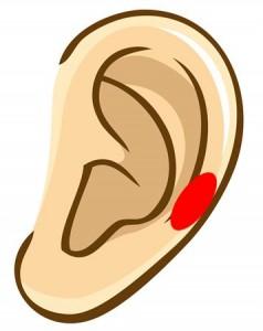 耳つぼ 肩こり帯