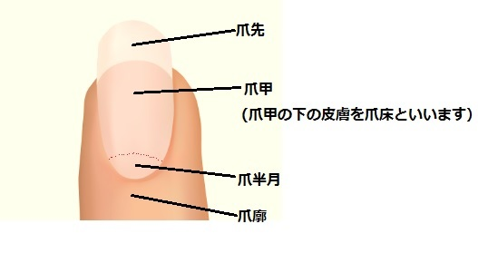 爪 ボロボロ 原因