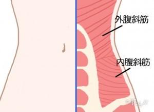 くびれを作る方法_腹斜筋