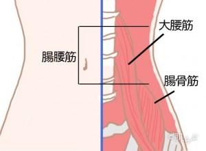 くびれを作る方法_腸腰筋