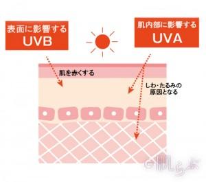 日焼け止め 冬 紫外線 美白 対策 SPF PA 紫外線A波 紫外線B波 UVA UVB