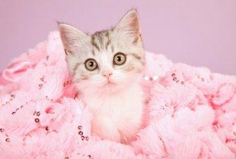 猫 コスメ