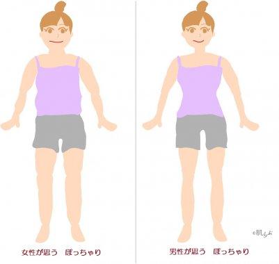 男性が好きな女性の体型